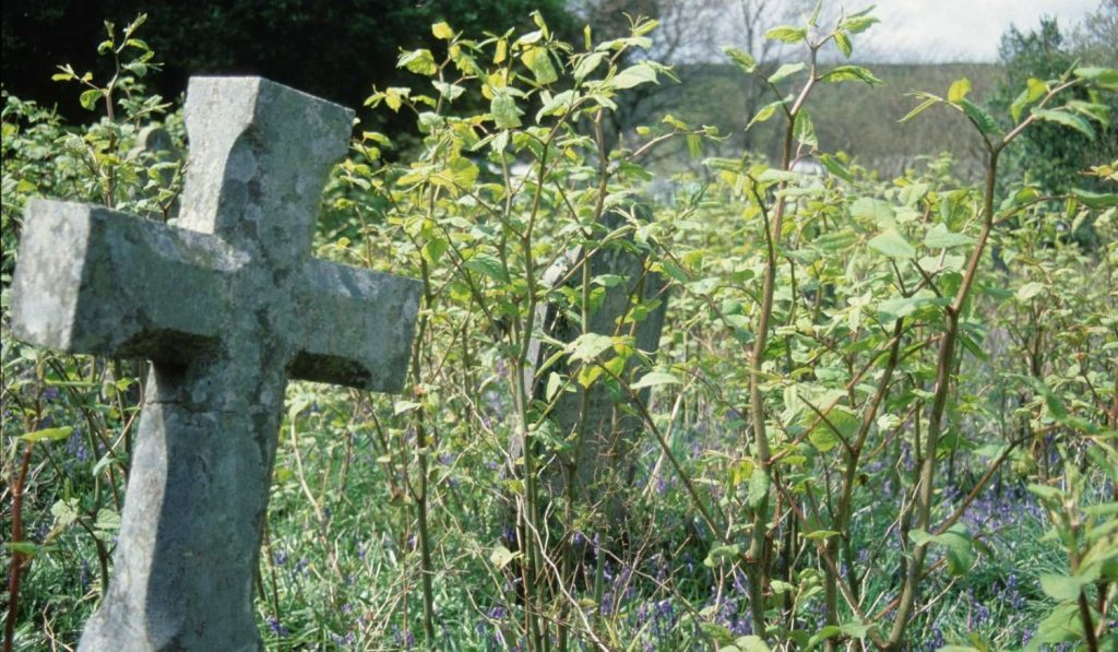 invasive and unwanted weeds