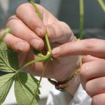 How to relocate plants from house to garden