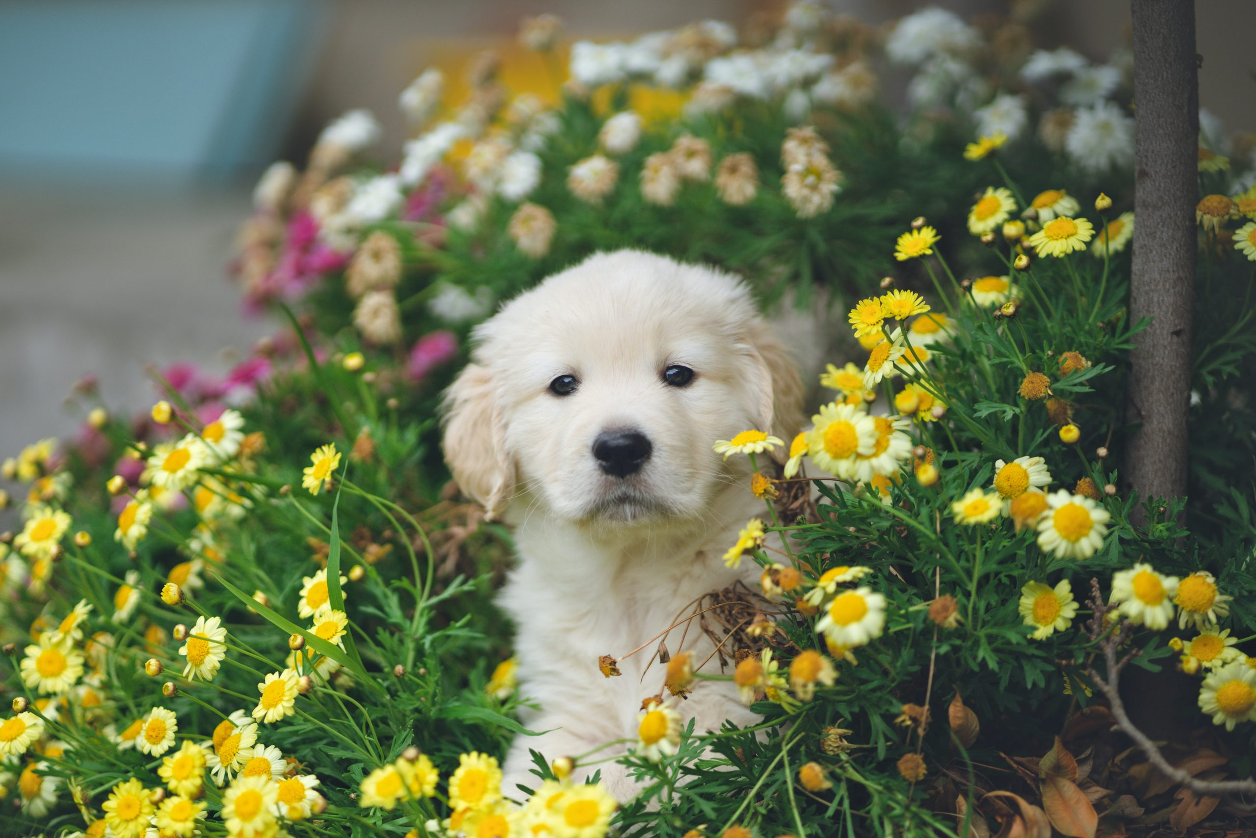 Guide to dog-friendly plants for the garden