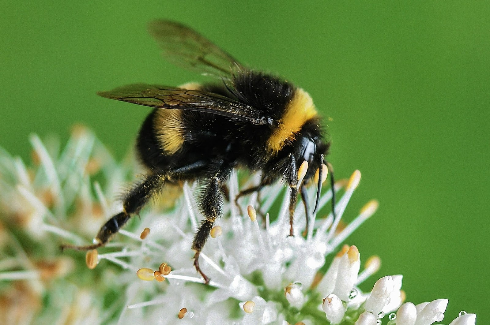 Garden tips to help save the bees in Britain